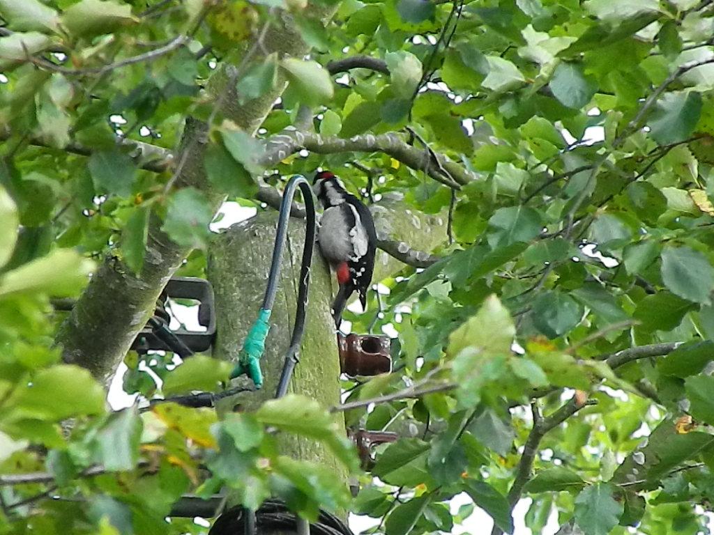greenwaytouringpark/woodpecker.JPG